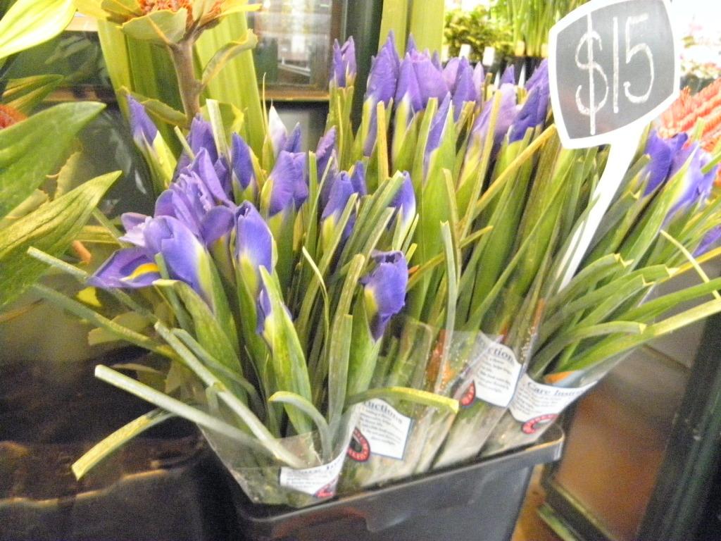 purple iris flowers