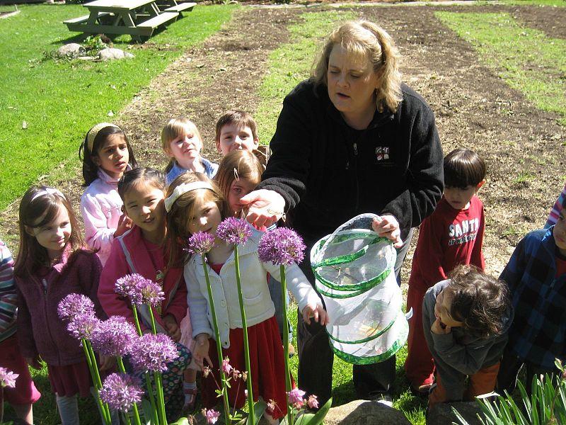 preschool children and teacher looking at flowers in the garden