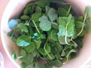 bowl of little pea leaves