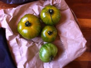 yelloow green tomatoes - fresh