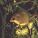 logging of World Heritage forests – Australian Government imperatives