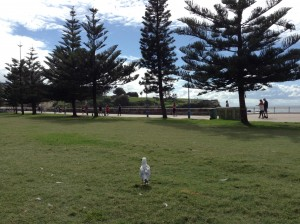 View to headland through park with seagull
