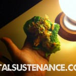 cos lettuce wraps – Beauty detox assignment #8