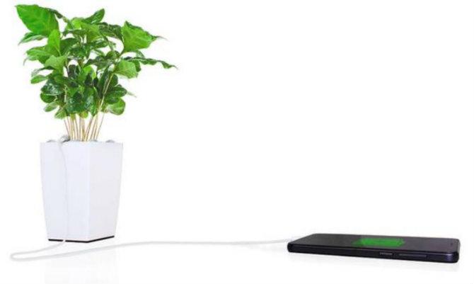 pot plant powering a phone