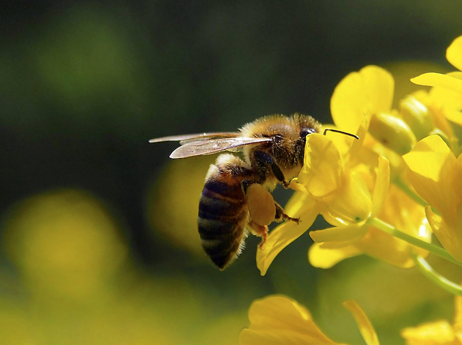 bee extinction - on the cards