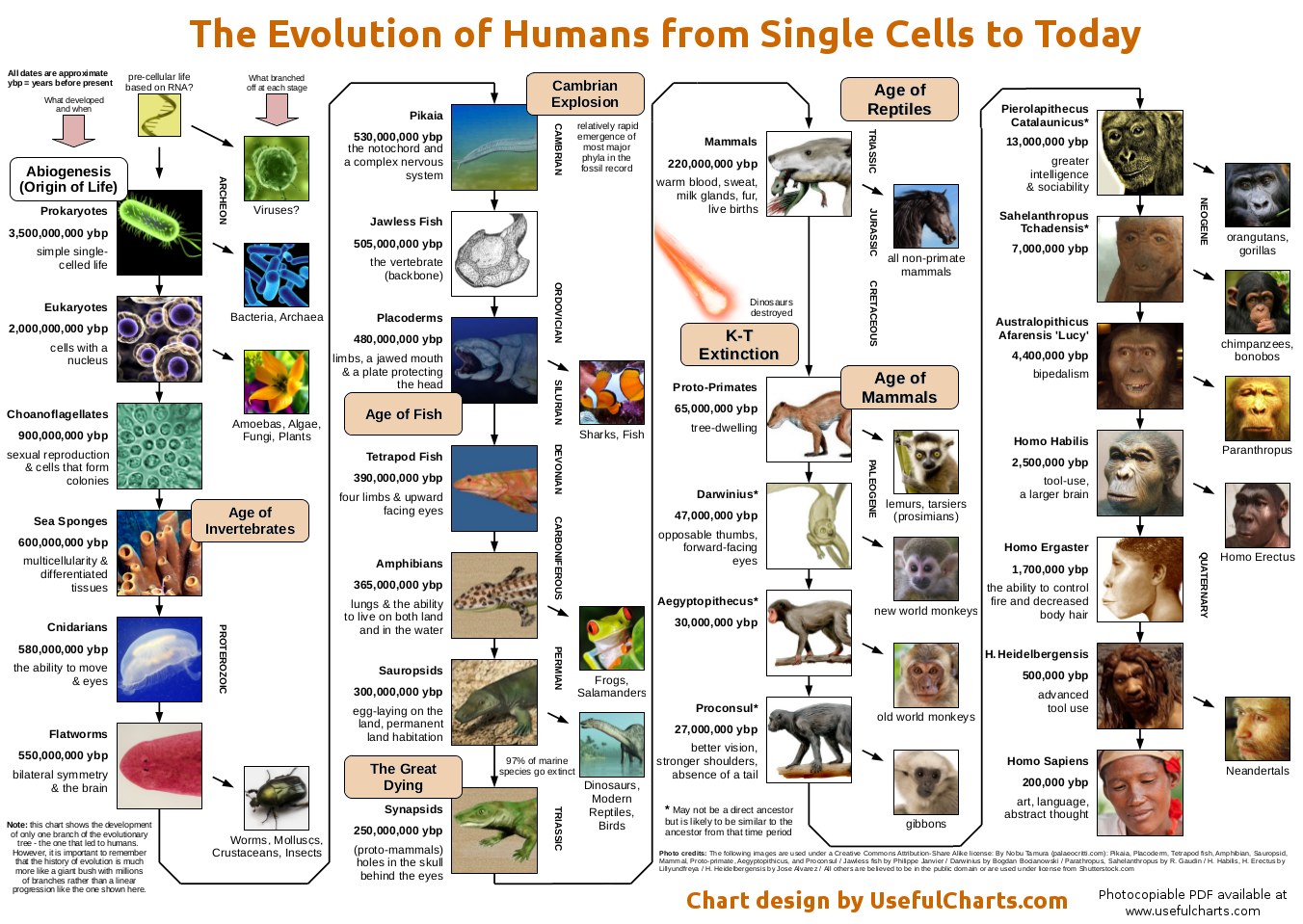 brief history of evolution - timeline graphic