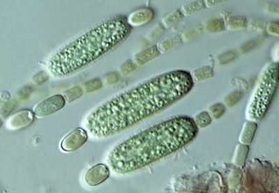 single celled organisms