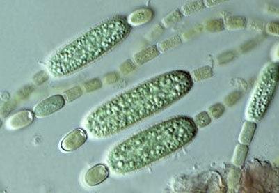 single celled organisms