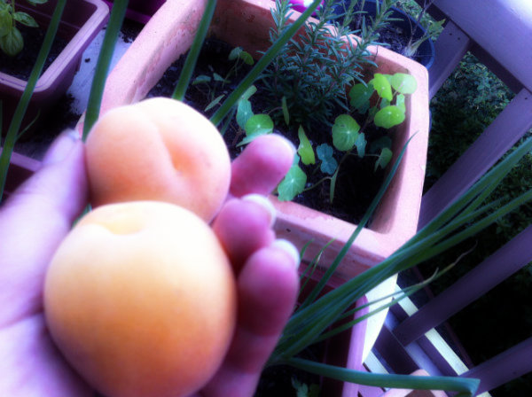 plastic free july by collecting apricots with no plastic