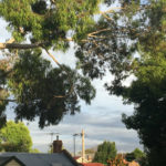 rooftops and gum trees and stormy skies