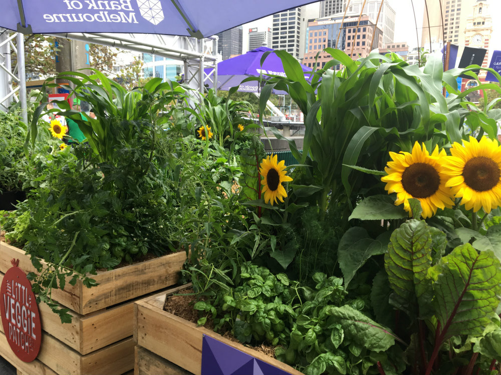 lush green plants and sunflowers at southbank