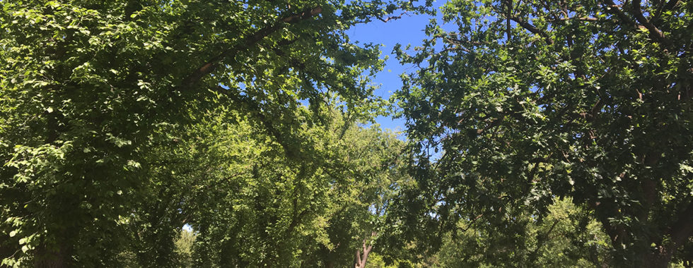 green verdant trees and sky in the sunshine