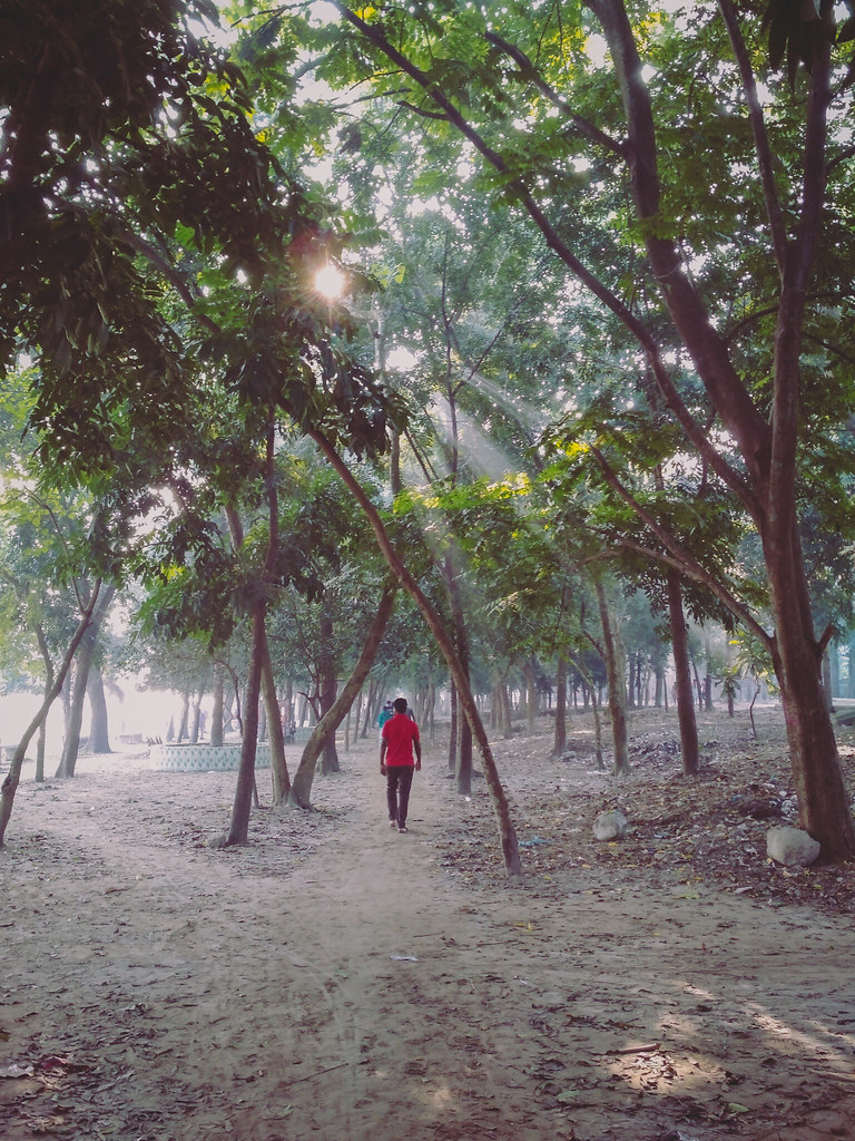morning walk through the forest - how do I motivate myself to exercise?